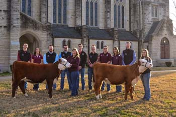 Ag student with Registered Herefords beside chapel